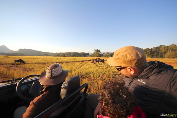 An African Safari with Kids: My Complete Guide