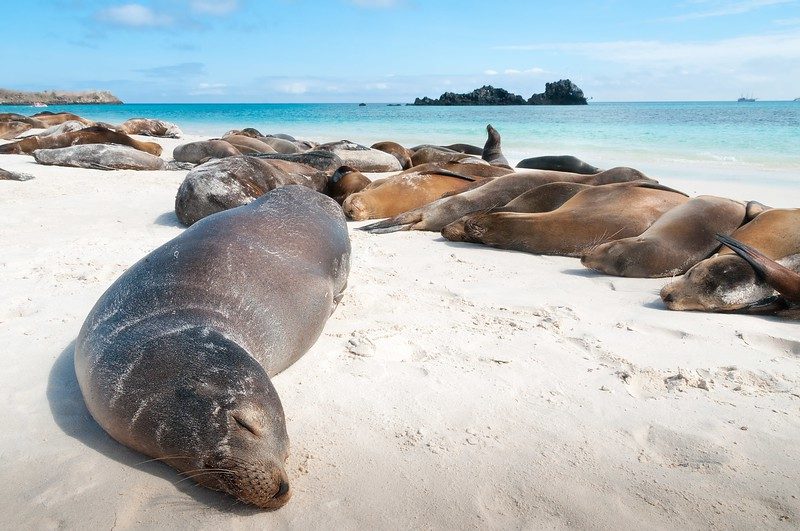 How to Visit the Galapagos IsIands: Travel Guide 2019
