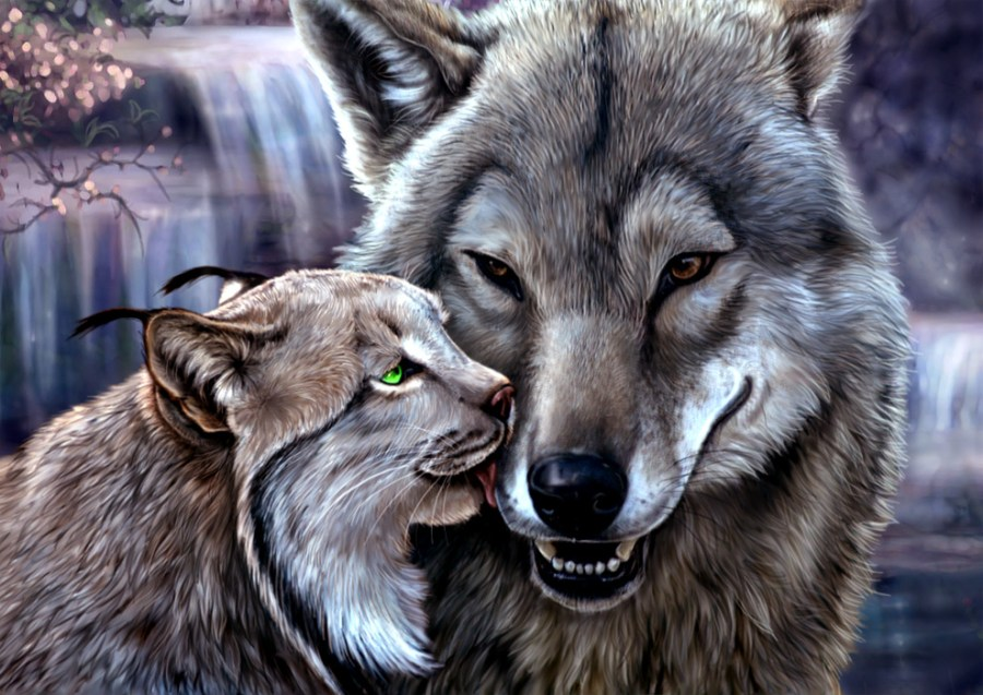 wolf licking love smile