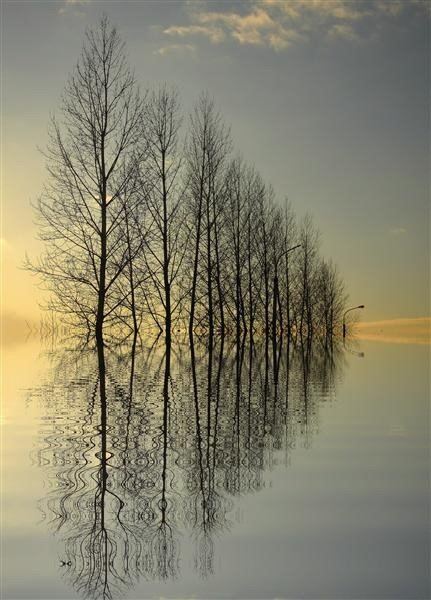 Great Trees Reflection