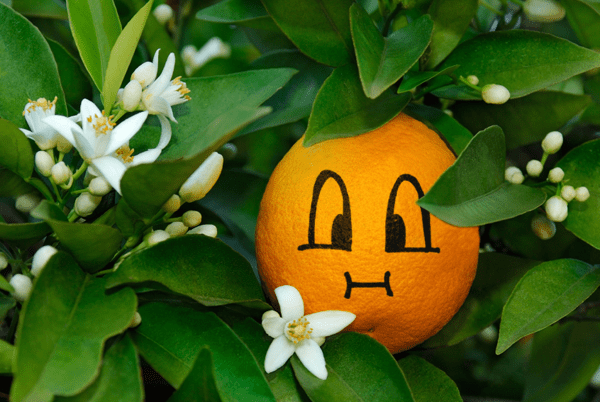Chubby face on orange