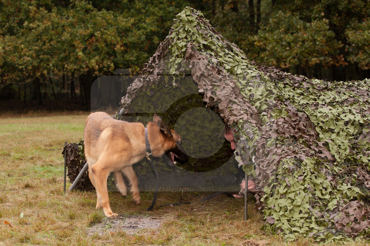 2016_10_20 1st Military Working Dog Regiment-105958