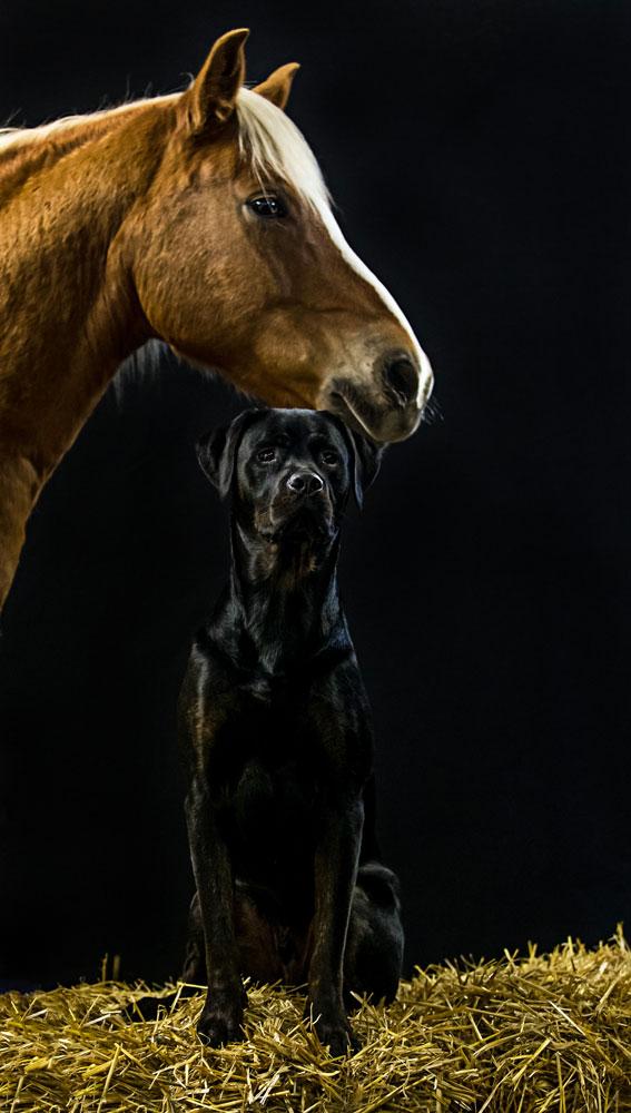 Hundneu2