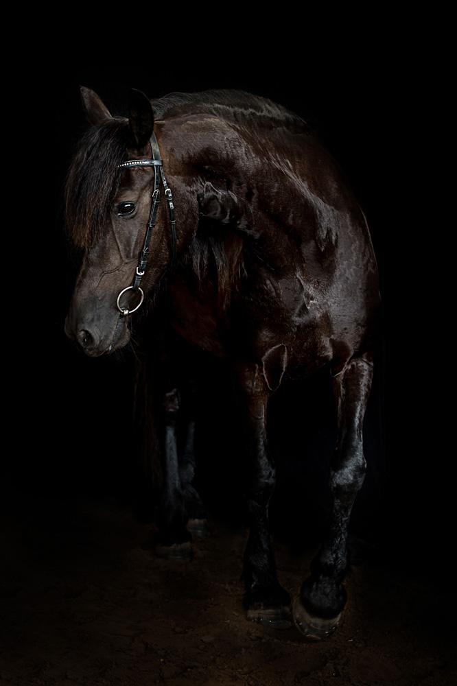 Pferde11
