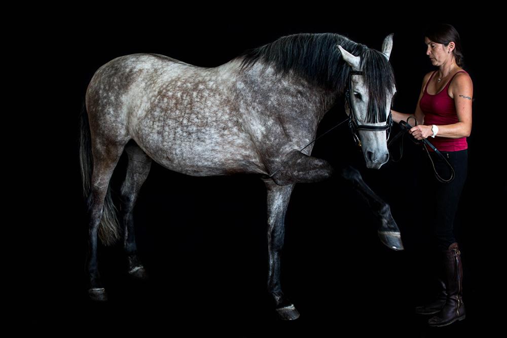 Pferde20