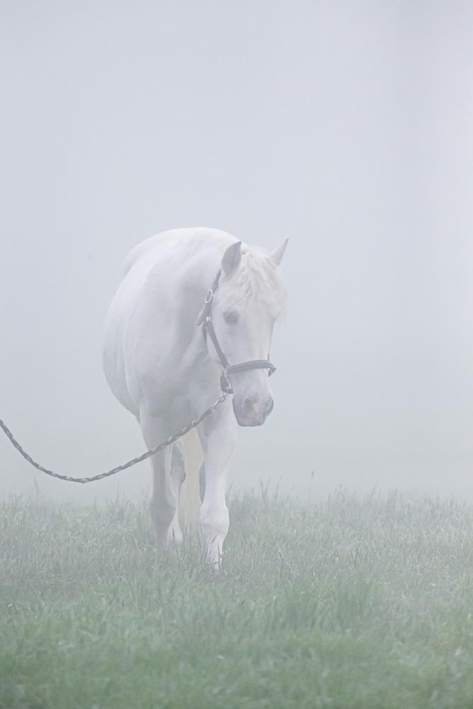 Pferde25