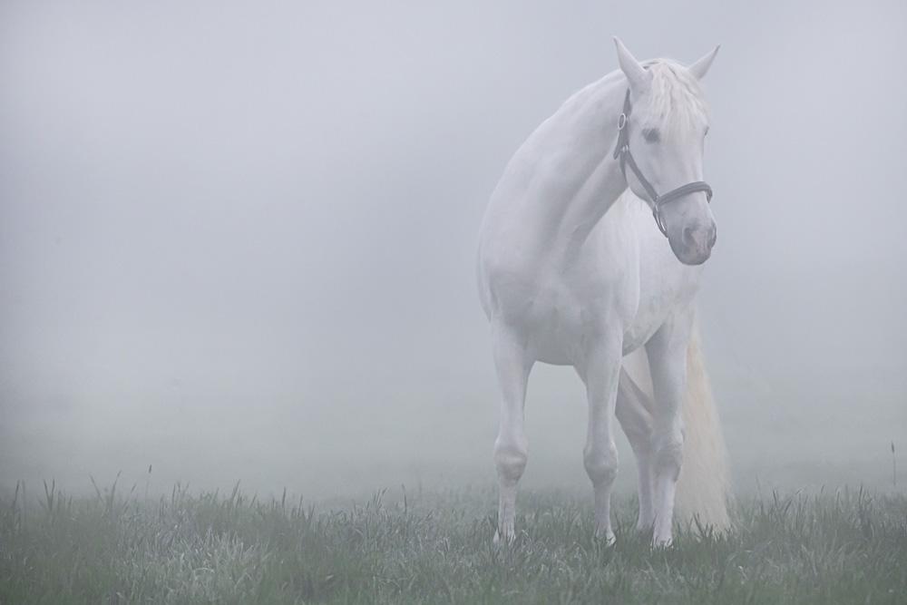Pferde29
