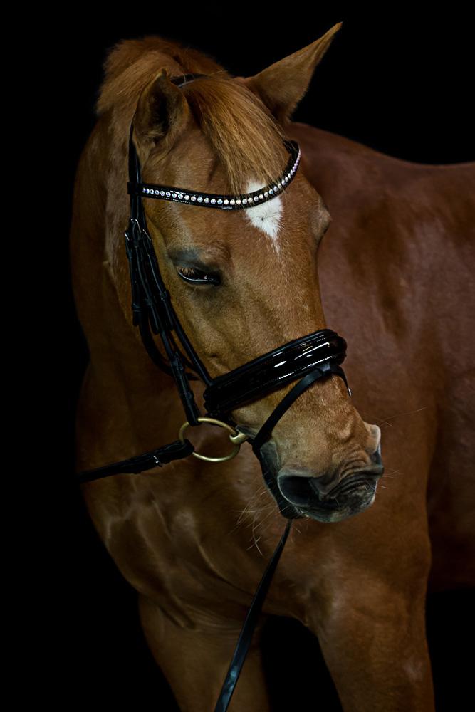 Pferde35