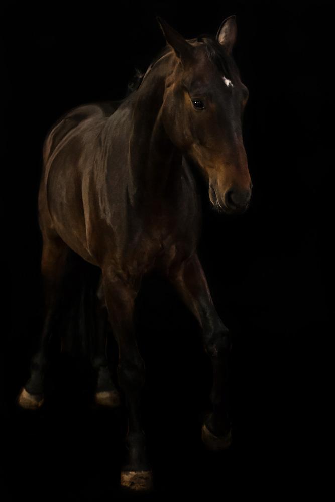Pferde39