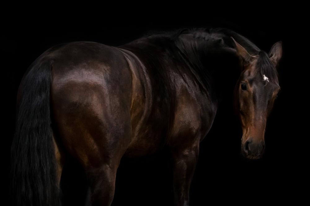Pferde41