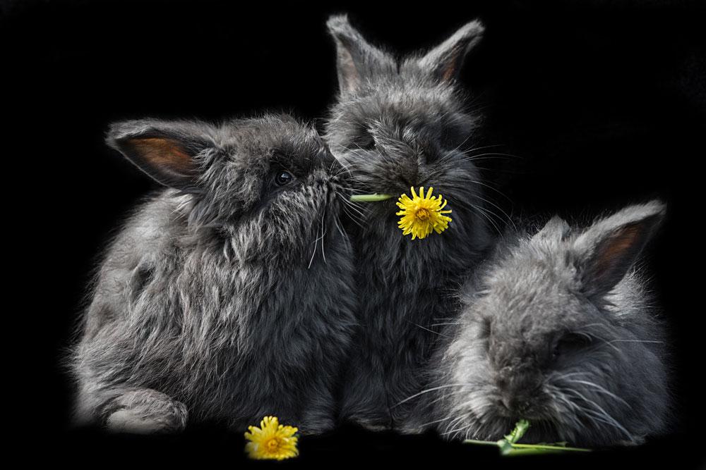 Kaninchen3