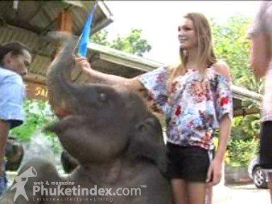 Miss Slovakia contestants on elephant trek