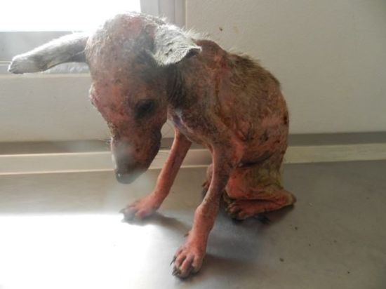 Please Help Shiver Save The Soi Dog Shelter...