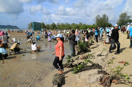 Phuket continues its reforestation project