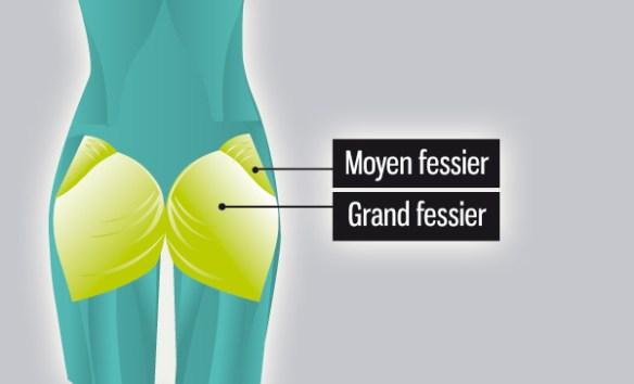 anatomie-fesse-muscle-grand-fessier