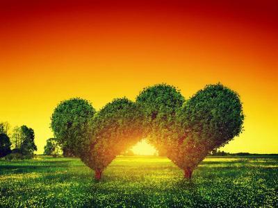 心形树木图片_心形树在夕阳下的绿色田野上相伴素材_高清图片_摄影照片_寻图免费打包下载