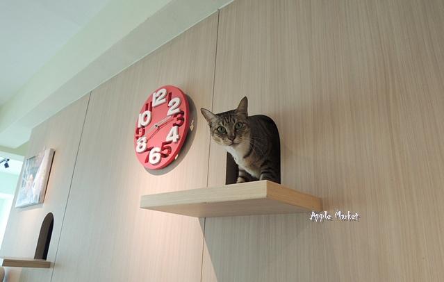 北區 homecafe.jpg