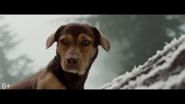 Путь домой/ A Dog's Way Home (2019) Дублированный трейлер смотреть онлайн видео от Cinematube в ...