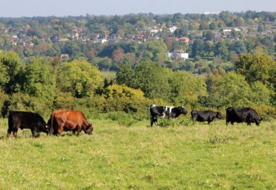 View of Surrey countryside from Bocketts Farm Park
