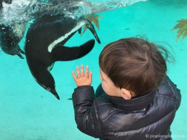 London Zoo Penguins