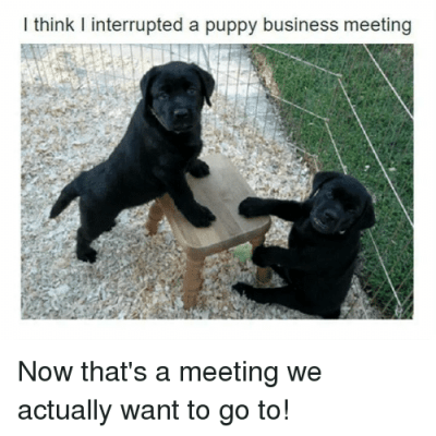 I Think I Interrupted a Puppy Business Meeting Now That's a Meeting We Actually Want to Go To ...