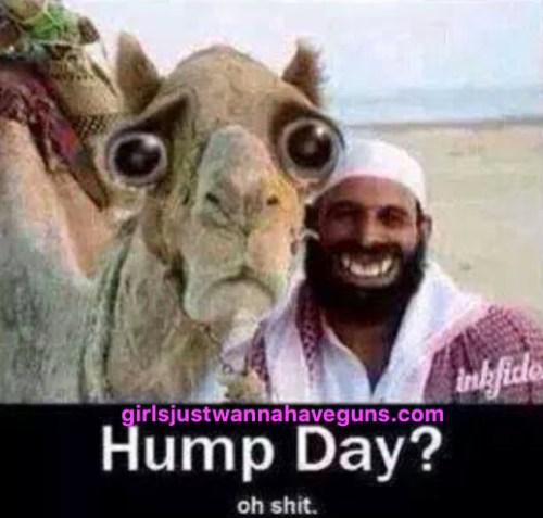 Medium Of Happy Hump Day Meme