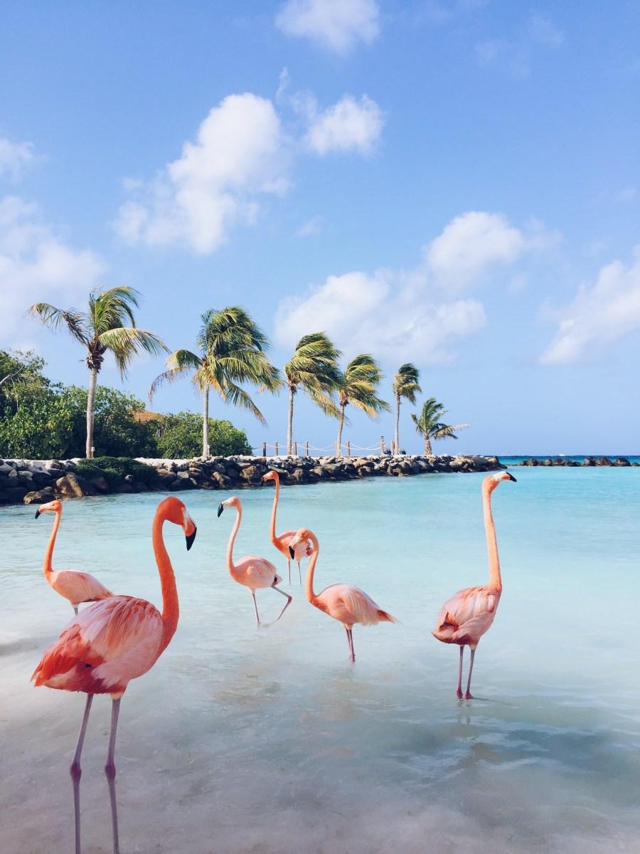 FLAMINGO BEACH - Aruba