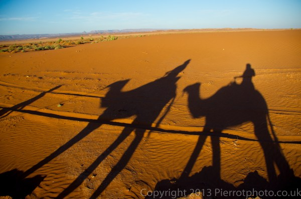 Camel shadows in the sand dunes, during sunset, in the Sahara desert, Morocco