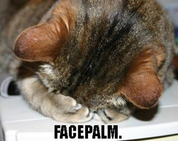 facepalm kitty