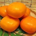 柿の甘渋の見分け方は!!人気品種のおすすめは!医者いらずの効能は必見‼
