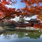 京都の紅葉と世界遺産を見るならまず平等院鳳凰堂から!!周辺の観光・グルメも!