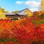 京都の東福寺は紅葉の海となる絶景!!庭園は国指定の名勝!ライトアップも❣