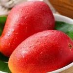 マンゴー品種の特徴!!人気おすすめの種類は濃厚でおいしい味と酸味が決め手❣