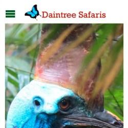daintree safaris