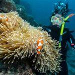 Diario Australia – Julio-Agosto 2016: Días 4-6: Wooroonoonan, Atherton Tablelands, Cairns, Fitzroy Island