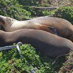Diario Australia – Julio-Agosto 2016: Días 20,21: Kangaroo Island