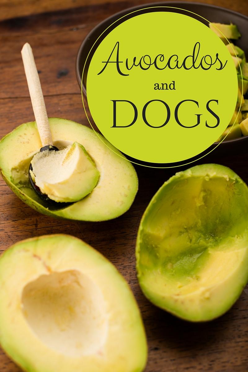 Fullsize Of Avocado And Dogs