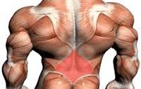 lower-back-muscles