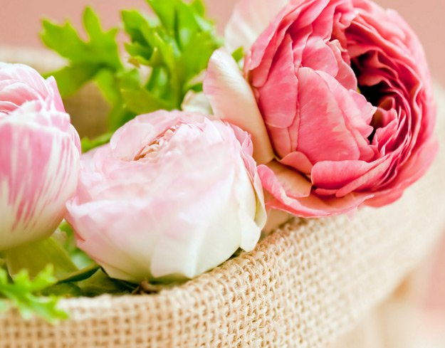 Peonies | Types of Summer Flowers