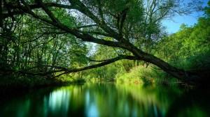 まとめ 森林と湖 フリー素材