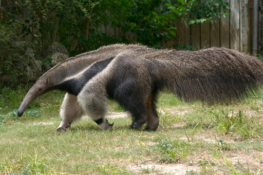Wanted: Anteater Spit