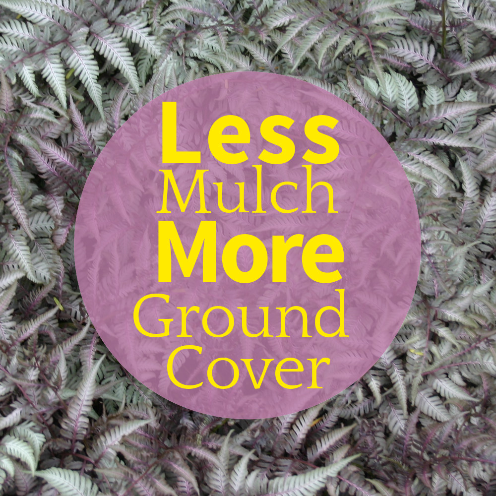 Mulch-less Gardening With Beautiful Ground Covers