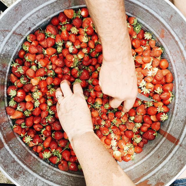 how to pick strawberries by rochelle greayer  www.pithandvigor.com