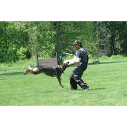 Small Crop Of How To Train A German Shepherd Puppy