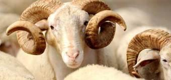 Pelajaran dari Kisah Nabi Ibrahim Menyembelih Ismail