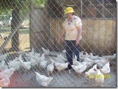 criar-pollos-en-casa1