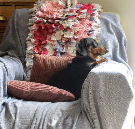 Miniature Dachshund on guard