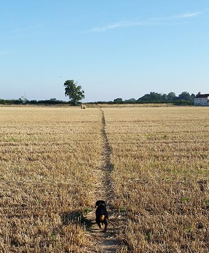 dog_walk