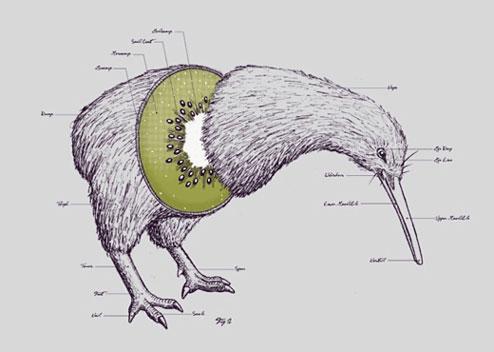 beneficios-kiwi-4