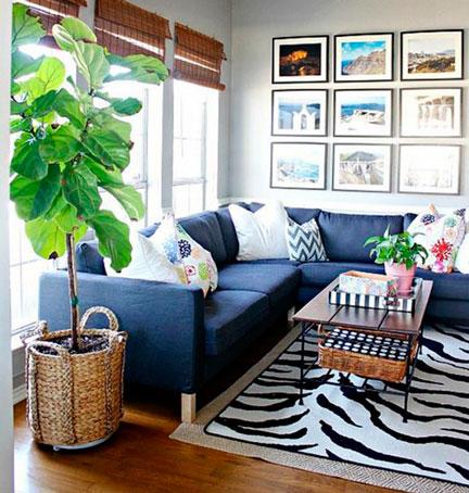 8 plantas de interior que no necesitan muchos cuidados - Cuidados plantas interior ...